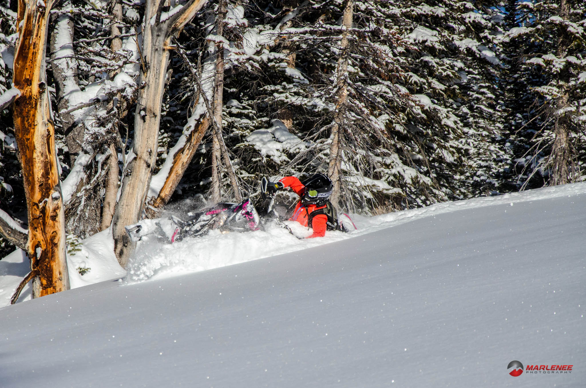 Kristy Harnish throws a shoulder into it while we rode in Cooke City, MT